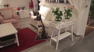 IKEA promuje adopcję psów