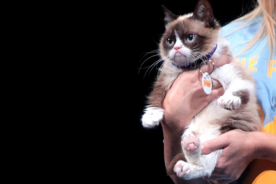 Grumpy Cat. 20 informacji o kocie, który zarabia więcej od Ciebie