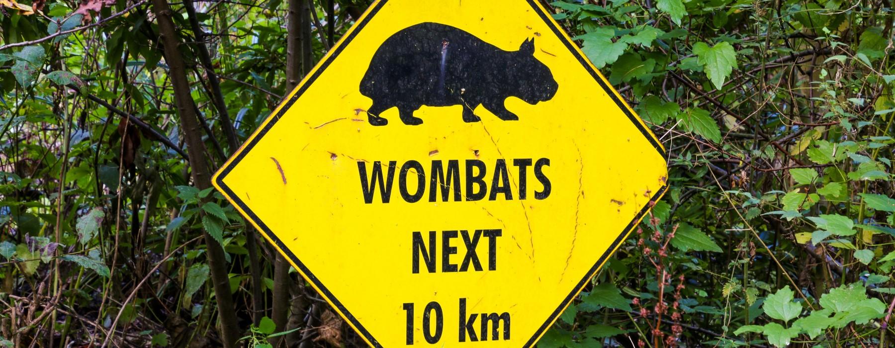 Podano do łóżka #43: A gdyby tak rzucić wszystko i przytulać wombaty?
