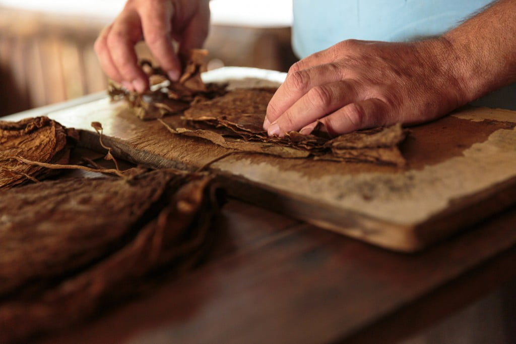 Making tobacco cigars in a typical farm in Vinales, Cuba