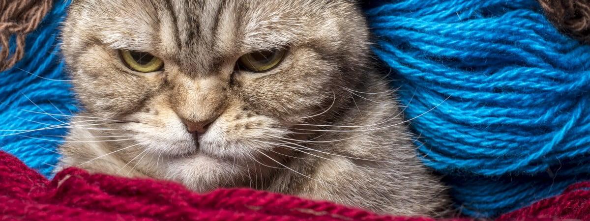Podano do łóżka #59: Koty, kosmetyki i trzymanie grzywki