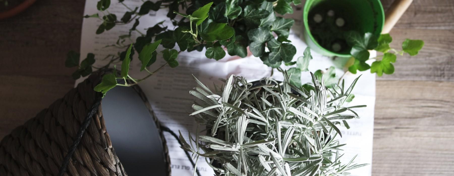 Podano do łóżka #69: Podpaski, albinosi i trudna miłość do roślin doniczkowych