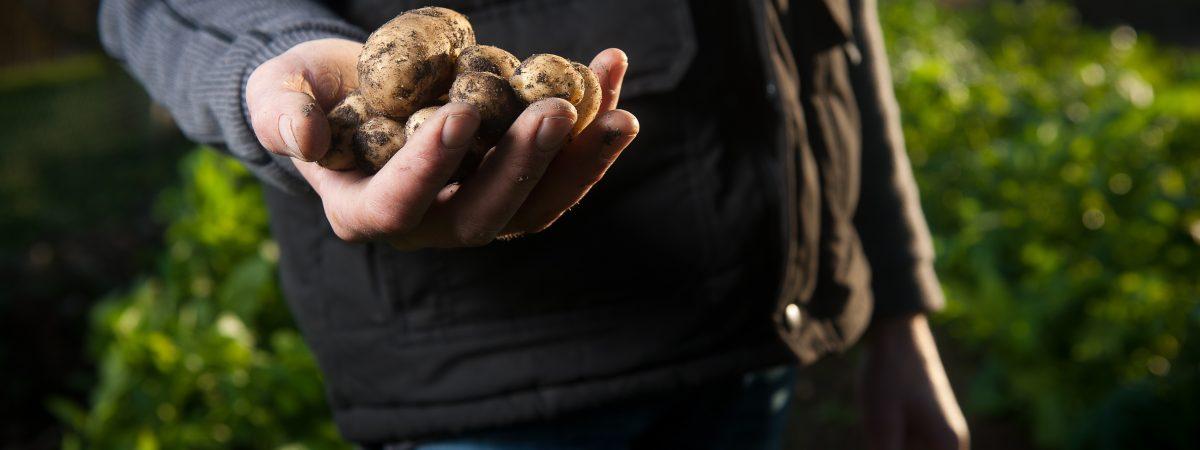 Podano do łóżka #91: Palmy, nekrolog i brudne ziemniaki
