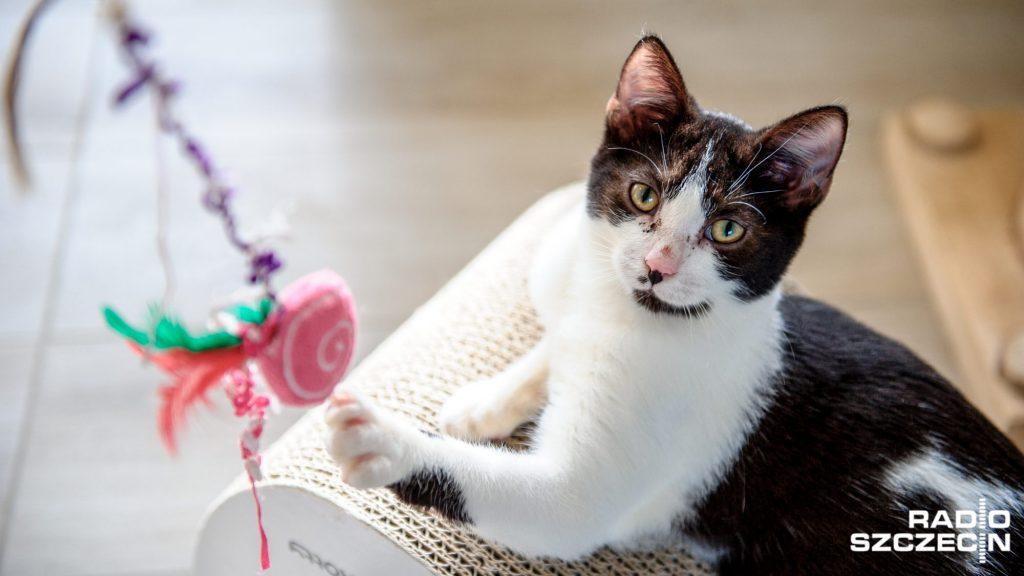 dom kota pod szczecinem