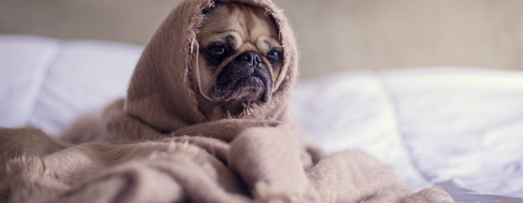 Gdy Ci zimno, gdy Ci źle, weźże kocyk, zagrzej się!