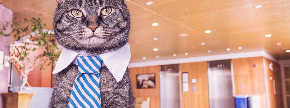 Kiedy Twój szef jest smutnym burakiem… Historia w GIF-ach