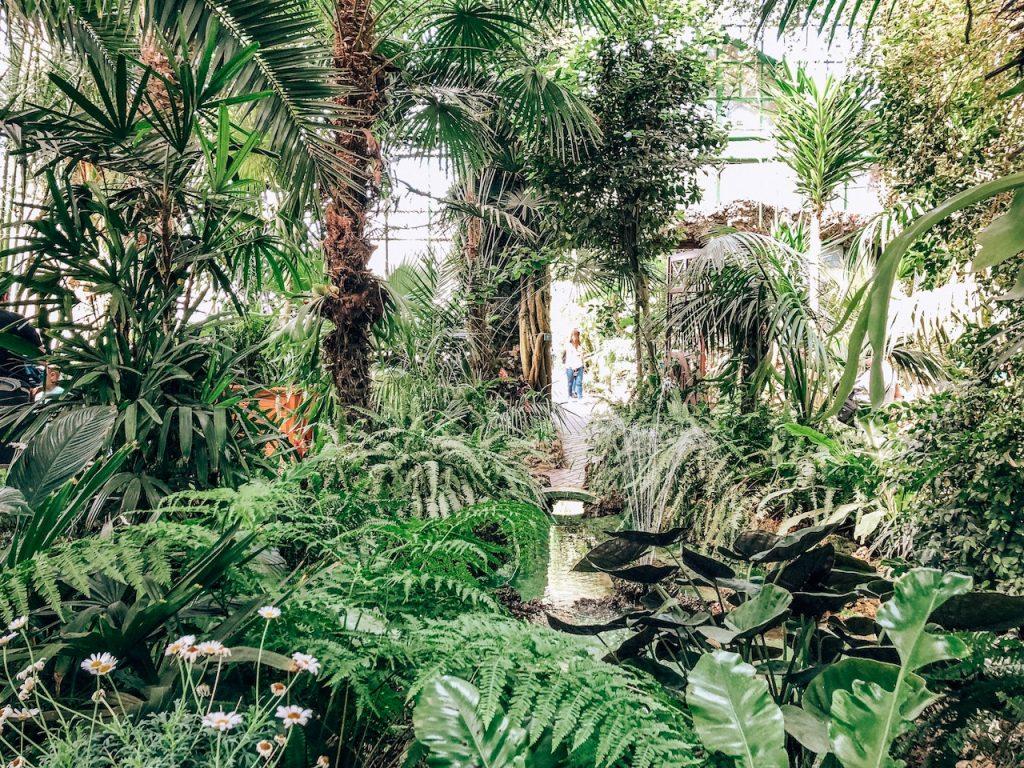 palmiarnia w wałbrzychu
